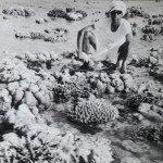 My Father Dr. Reddiah Kosaraju. Andamans & Nicobar Islands. 1977